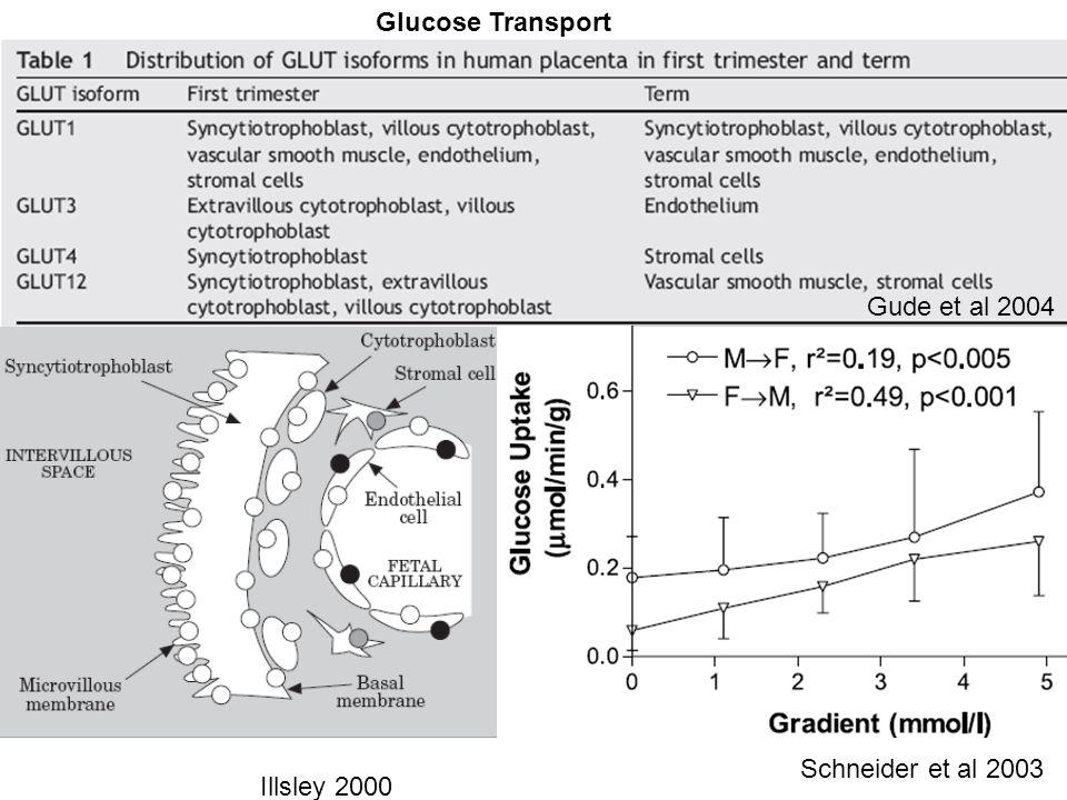 Gude et al 2004 Illsley 2000 Glucose Transport Schneider et al 2003