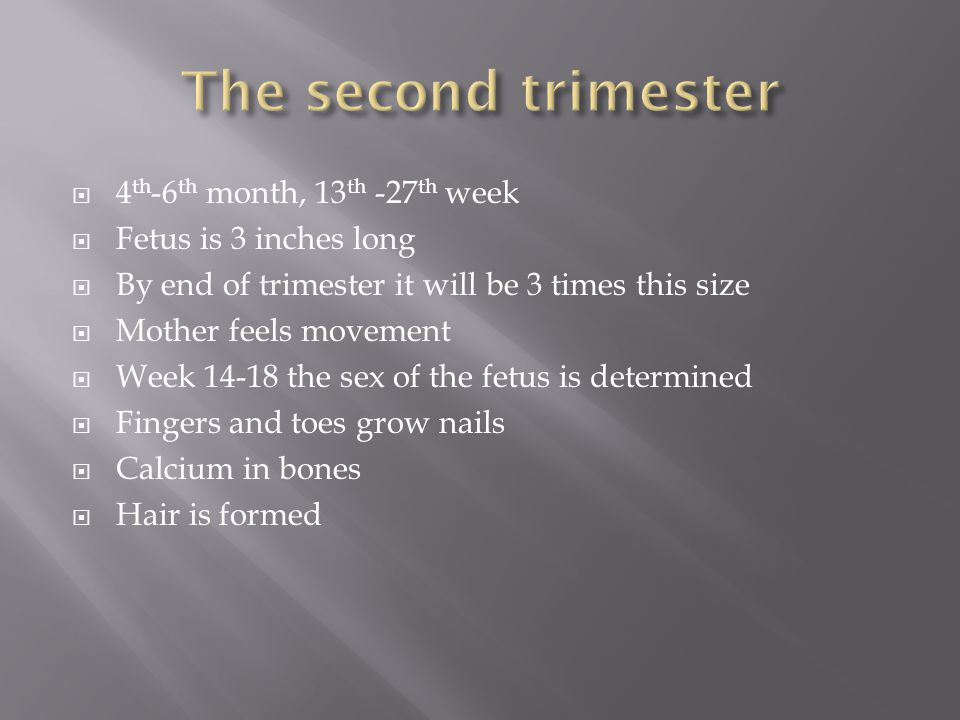  4 th -6 th month, 13 th -27 th week  Fetus is 3 inches long  By end of trimester it will be 3 times this size  Mother feels movement  Week 14-18 the sex of the fetus is determined  Fingers and toes grow nails  Calcium in bones  Hair is formed