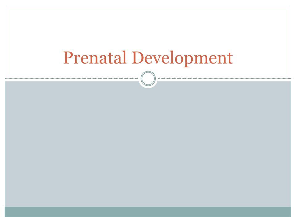 Prenatal Development