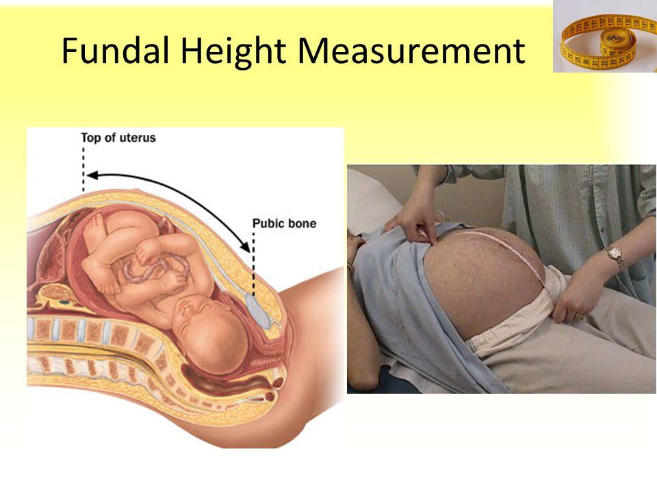 Fundal Height Measurement