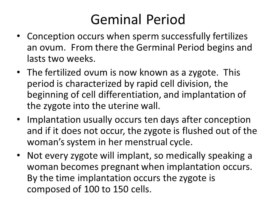 Geminal Period Conception occurs when sperm successfully fertilizes an ovum.