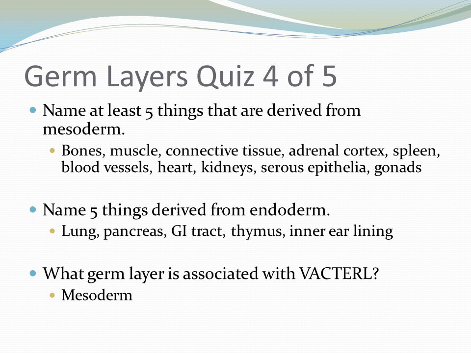 Germ Layers Quiz 4 of 5 Name at least 5 things that are derived from mesoderm. Bones, muscle, connective tissue, adrenal cortex, spleen, blood vessels