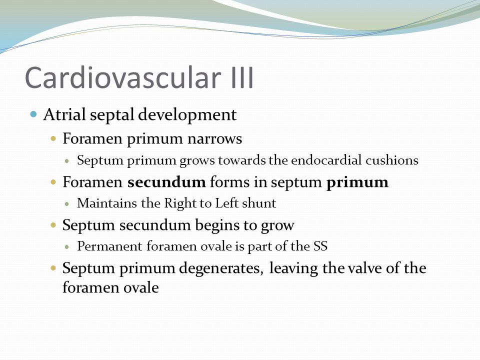 Cardiovascular III Atrial septal development Foramen primum narrows Septum primum grows towards the endocardial cushions Foramen secundum forms in sep