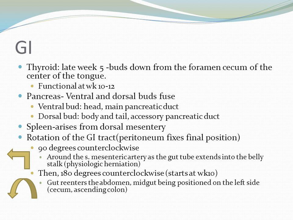 GI Thyroid: late week 5 -buds down from the foramen cecum of the center of the tongue. Functional at wk 10-12 Pancreas- Ventral and dorsal buds fuse V