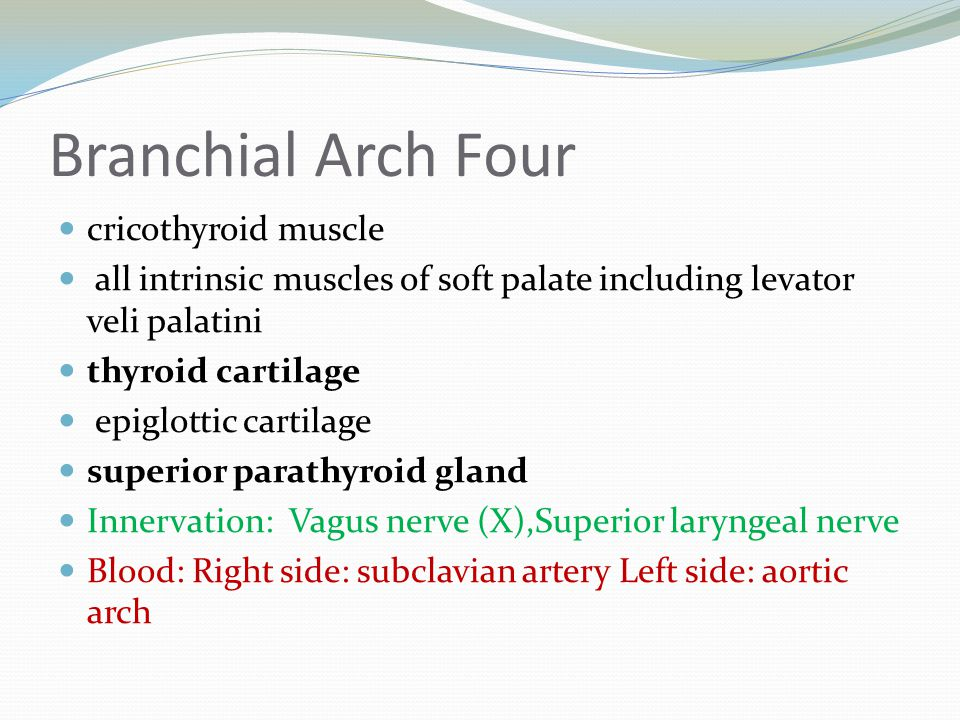 Branchial Arch Four cricothyroid muscle all intrinsic muscles of soft palate including levator veli palatini thyroid cartilage epiglottic cartilage su