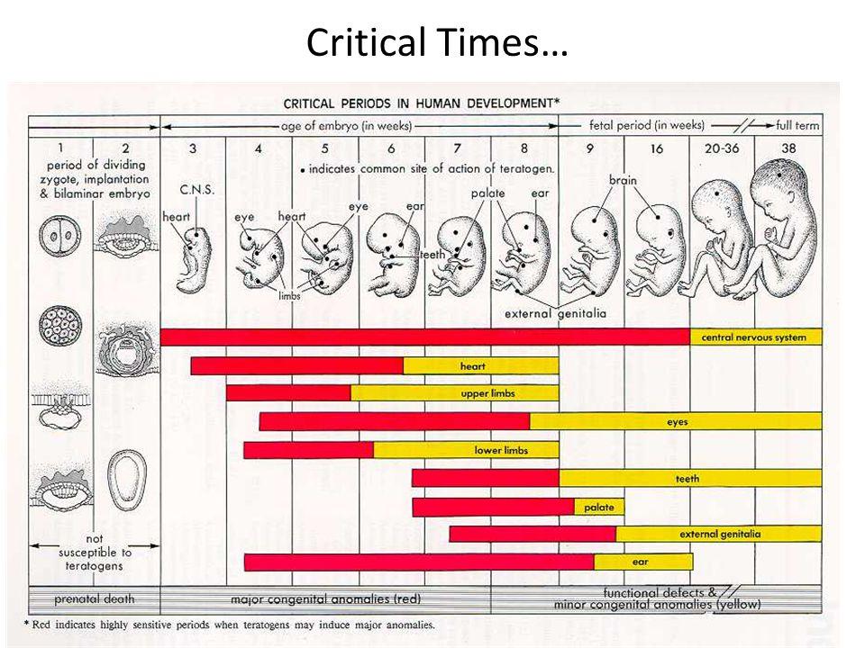 Critical Times…