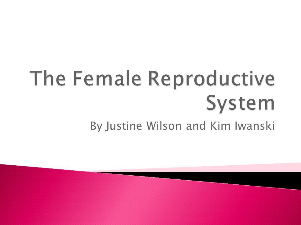 By Justine Wilson and Kim Iwanski