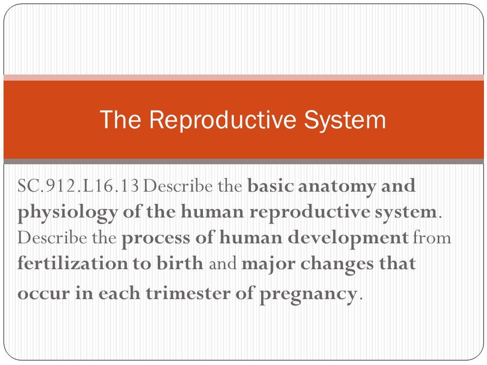 SC.912.L16.13 Describe the basic anatomy and physiology of the human reproductive system. Describe the process of human development from fertilization