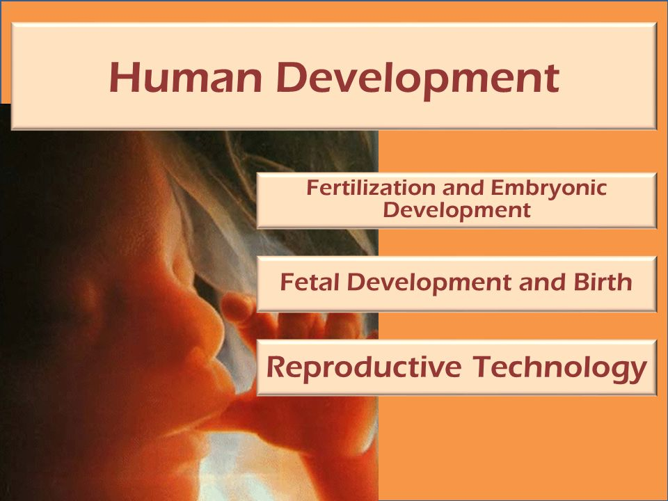 Human Development Fertilization and Embryonic Development Fetal Development and Birth Reproductive Technology
