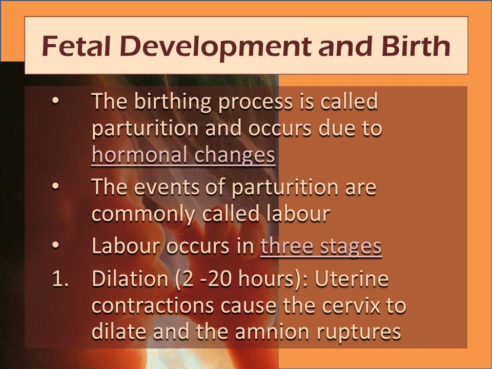 The birthing process is called parturition and occurs due to hormonal changes The birthing process is called parturition and occurs due to hormonal changes hormonal changes hormonal changes The events of parturition are commonly called labour The events of parturition are commonly called labour Labour occurs in three stages Labour occurs in three stagesthree stagesthree stages 1.Dilation (2 -20 hours): Uterine contractions cause the cervix to dilate and the amnion ruptures Fetal Development and Birth