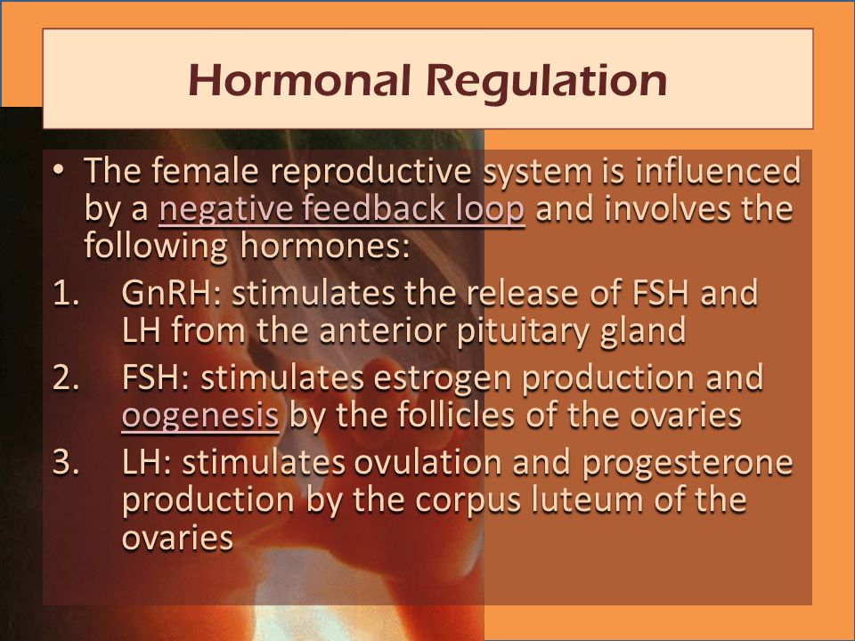 The female reproductive system is influenced by a negative feedback loop and involves the following hormones: The female reproductive system is influenced by a negative feedback loop and involves the following hormones:negative feedback loopnegative feedback loop 1.GnRH: stimulates the release of FSH and LH from the anterior pituitary gland 2.FSH: stimulates estrogen production and oogenesis by the follicles of the ovaries oogenesis 3.LH: stimulates ovulation and progesterone production by the corpus luteum of the ovaries Hormonal Regulation