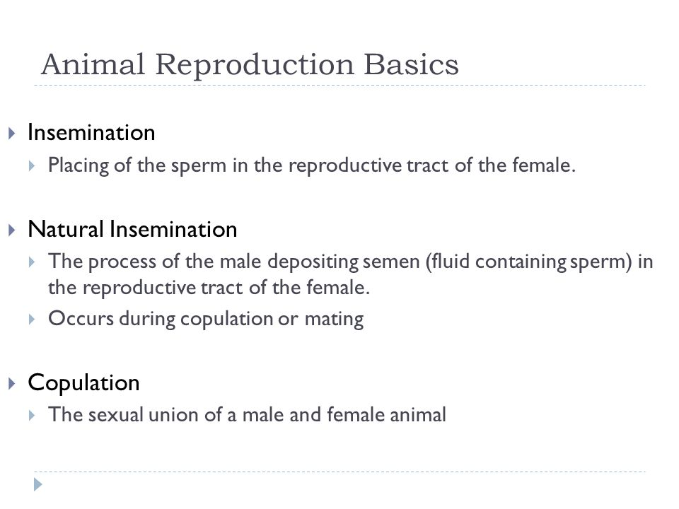 Animal Reproduction Basics  Artificial Insemination  Involves a technician collecting semen from a male and placing it in the reproductive tract of a female  http://www.youtube.com/watch?v=stvnGYcKz60