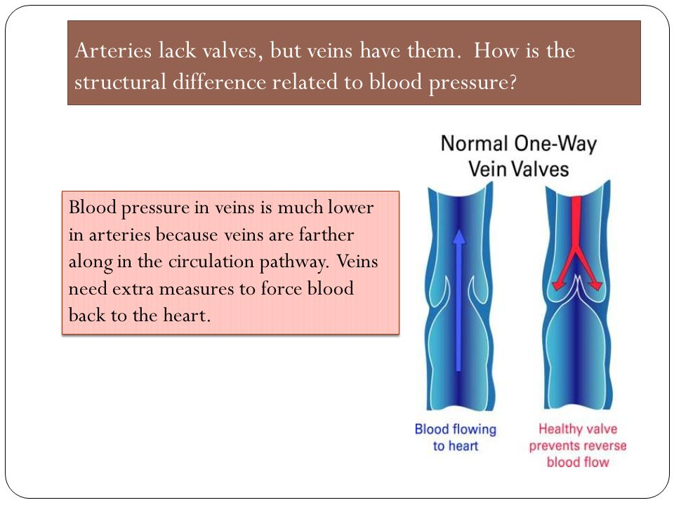 Arteries lack valves, but veins have them. How is the structural difference related to blood pressure? Blood pressure in veins is much lower in arteri
