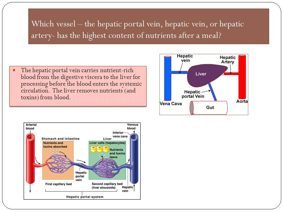 Which vessel – the hepatic portal vein, hepatic vein, or hepatic artery- has the highest content of nutrients after a meal? The hepatic portal vein ca
