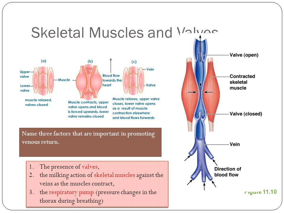 What is the relationship between cross-sectional area of a blood vessel and velocity (speed) of blood flow in that vessel.