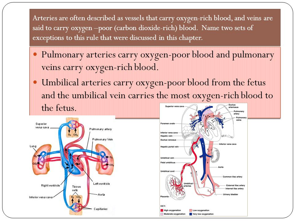 Arteries lack valves, but veins have them.
