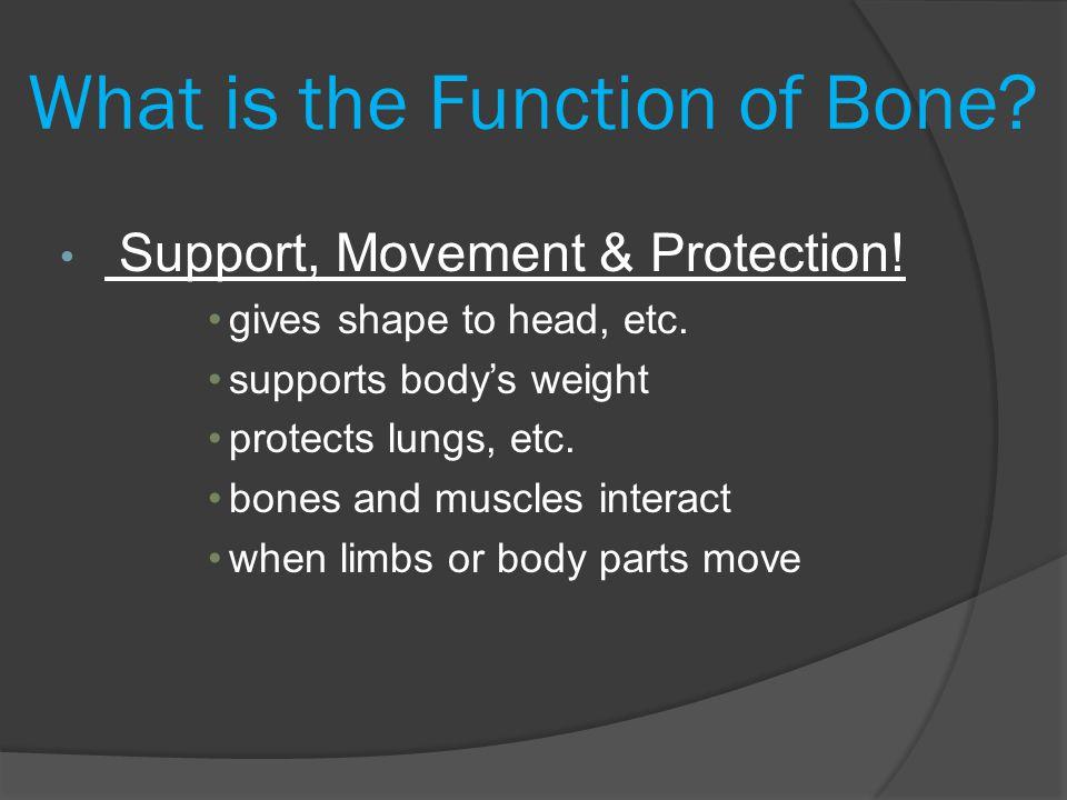 Bone Growth In The Fetus