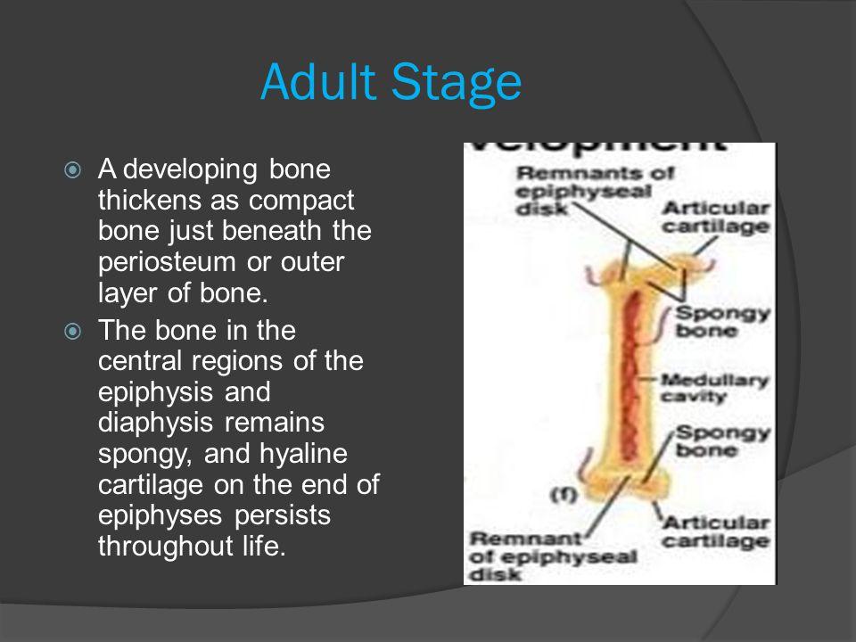What Do Bones Need to Grow.