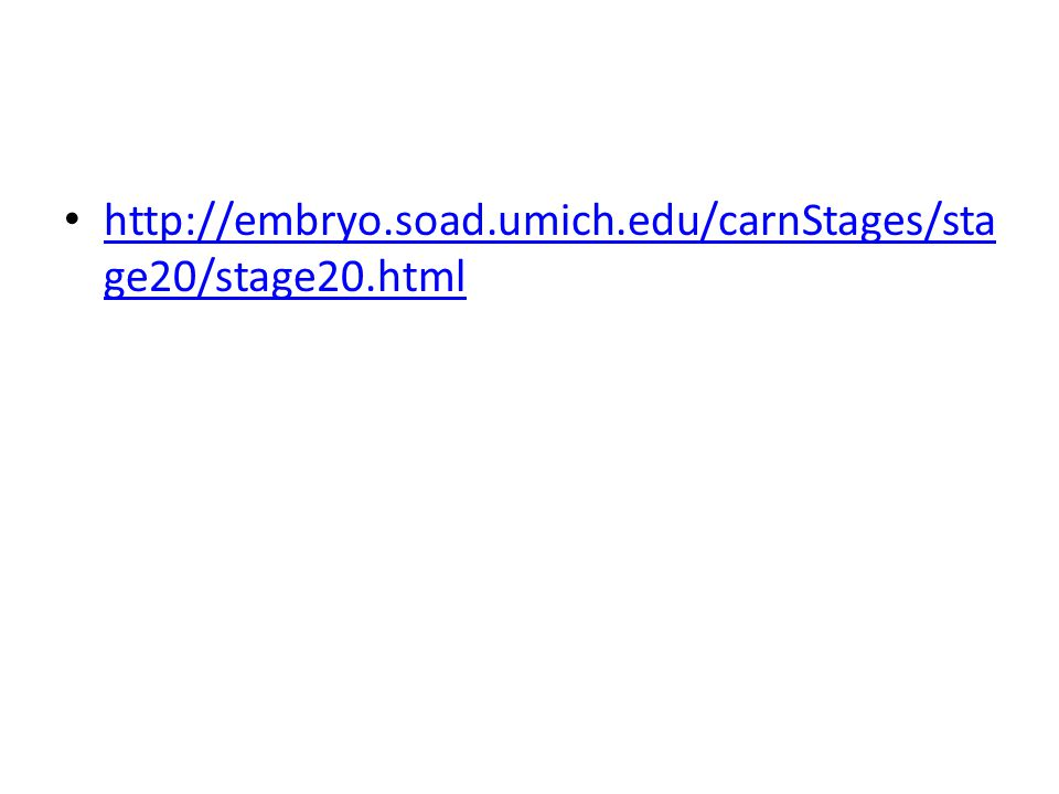 http://embryo.soad.umich.edu/carnStages/sta ge20/stage20.html http://embryo.soad.umich.edu/carnStages/sta ge20/stage20.html