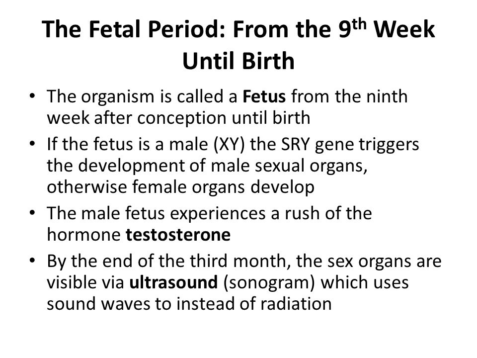 The Fetal Period: From the 9 th Week Until Birth The organism is called a Fetus from the ninth week after conception until birth If the fetus is a male (XY) the SRY gene triggers the development of male sexual organs, otherwise female organs develop The male fetus experiences a rush of the hormone testosterone By the end of the third month, the sex organs are visible via ultrasound (sonogram) which uses sound waves to instead of radiation