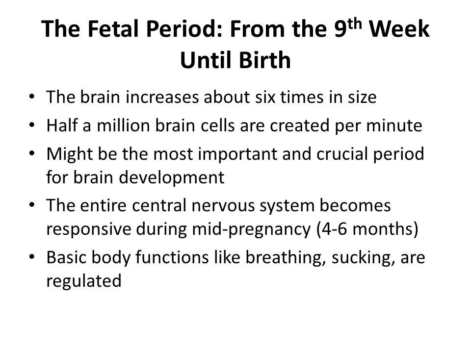 The Fetal Period: From the 9 th Week Until Birth The brain increases about six times in size Half a million brain cells are created per minute Might be the most important and crucial period for brain development The entire central nervous system becomes responsive during mid-pregnancy (4-6 months) Basic body functions like breathing, sucking, are regulated