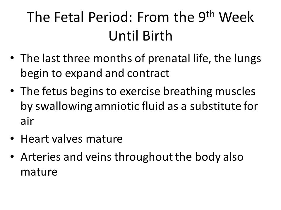 The Fetal Period: From the 9 th Week Until Birth The last three months of prenatal life, the lungs begin to expand and contract The fetus begins to exercise breathing muscles by swallowing amniotic fluid as a substitute for air Heart valves mature Arteries and veins throughout the body also mature