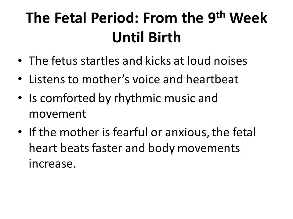 The Fetal Period: From the 9 th Week Until Birth The fetus startles and kicks at loud noises Listens to mother's voice and heartbeat Is comforted by rhythmic music and movement If the mother is fearful or anxious, the fetal heart beats faster and body movements increase.