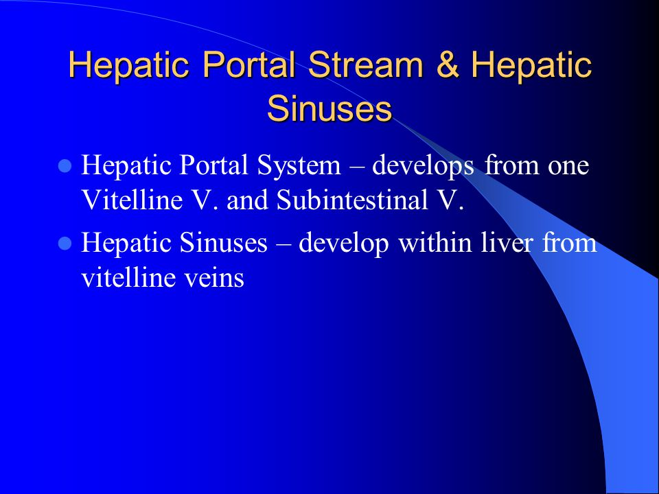 Hepatic Portal Stream & Hepatic Sinuses Hepatic Portal System – develops from one Vitelline V. and Subintestinal V. Hepatic Sinuses – develop within l