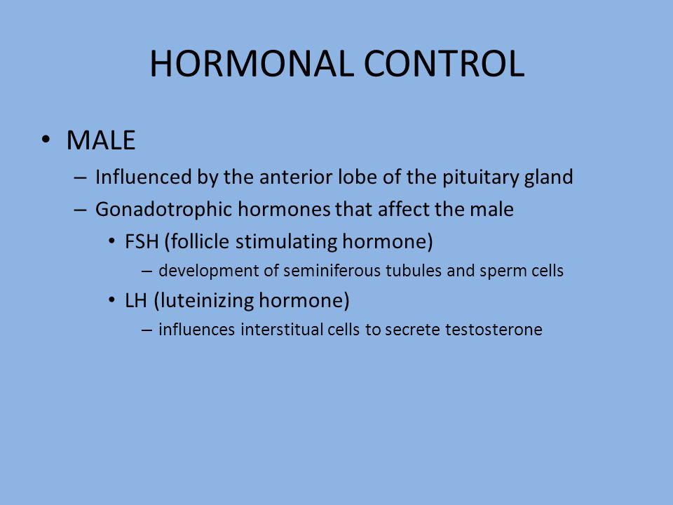 HORMONAL CONTROL MALE – Influenced by the anterior lobe of the pituitary gland – Gonadotrophic hormones that affect the male FSH (follicle stimulating