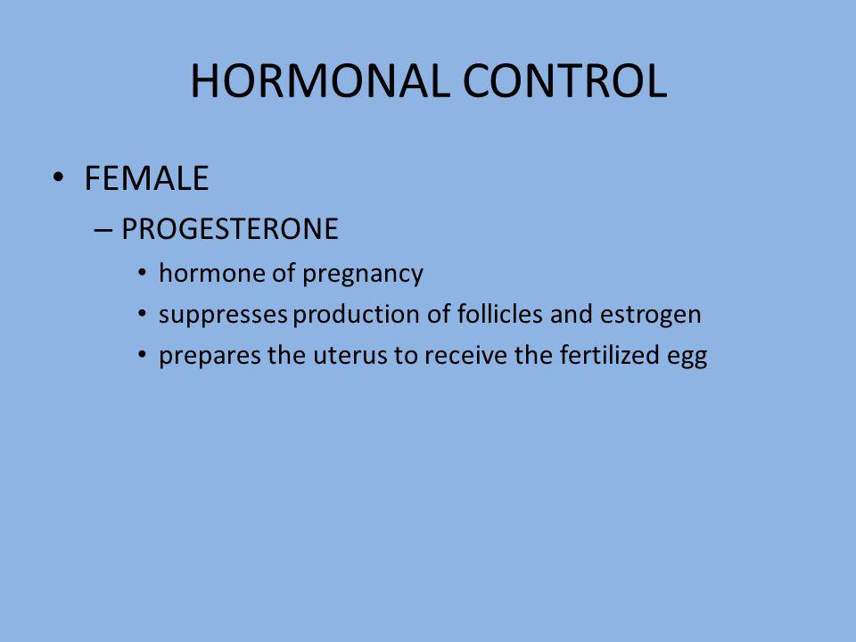 HORMONAL CONTROL FEMALE – PROGESTERONE hormone of pregnancy suppresses production of follicles and estrogen prepares the uterus to receive the fertili