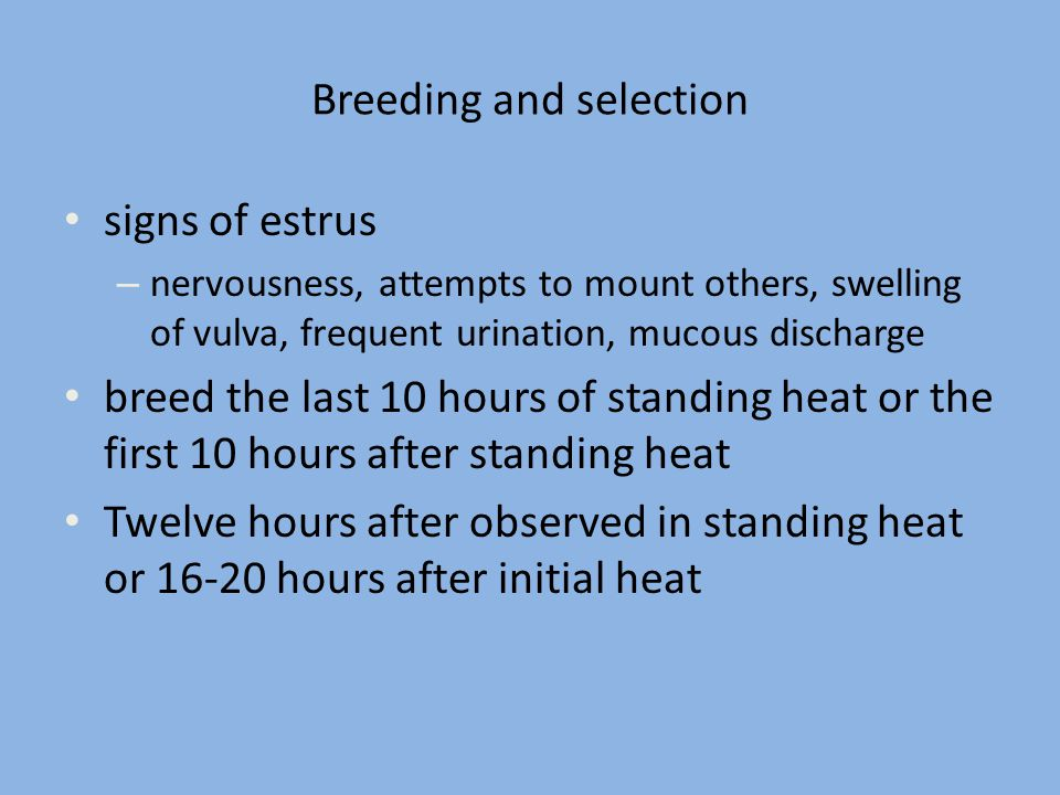Breeding and selection signs of estrus – nervousness, attempts to mount others, swelling of vulva, frequent urination, mucous discharge breed the last