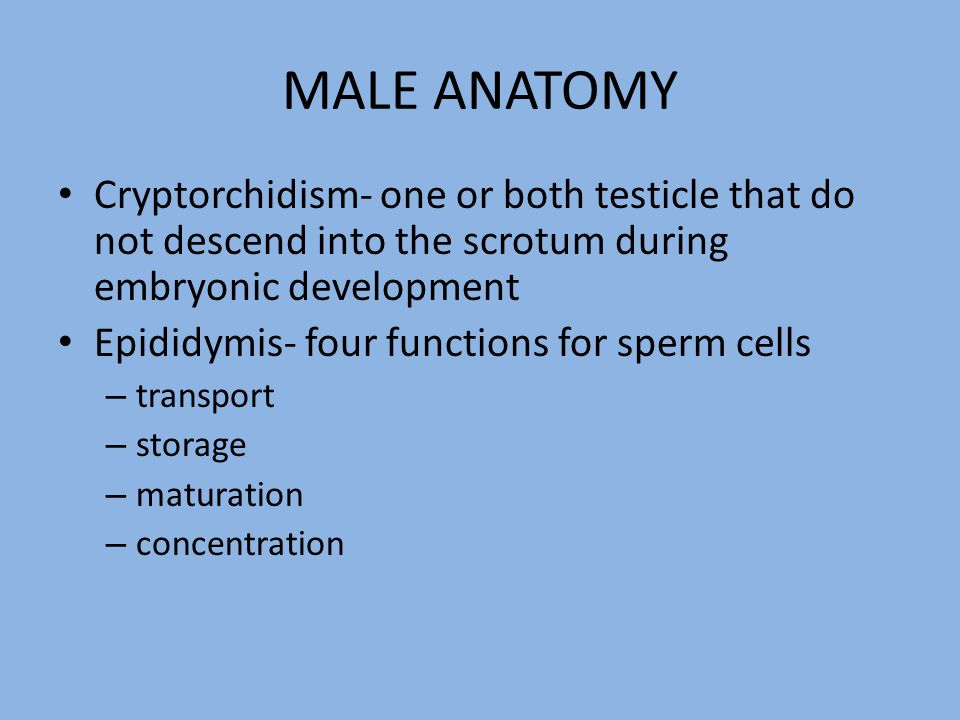 Consists of horns and a body −uterine horns −uterine body Is site of embryonic growth Is site of placental and fetal development Varies in shape among species A sow has a very long uterus and a mare has a very short uterus