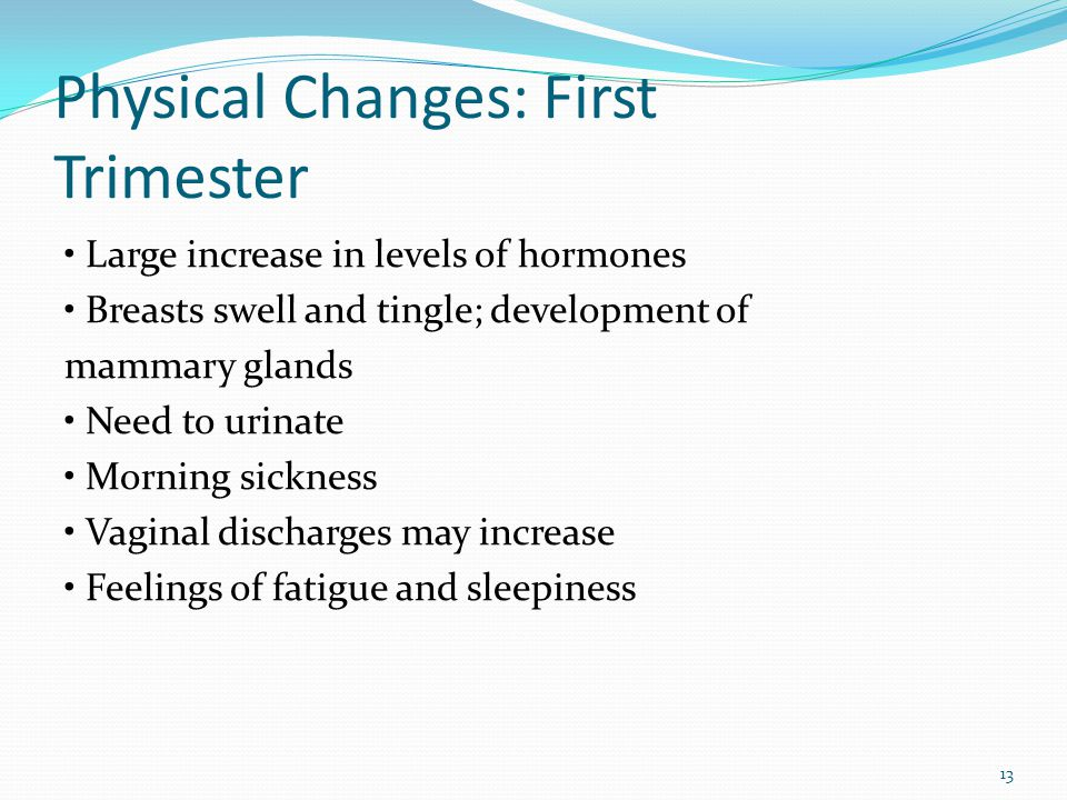 Physical Changes: First Trimester Large increase in levels of hormones Breasts swell and tingle; development of mammary glands Need to urinate Morning