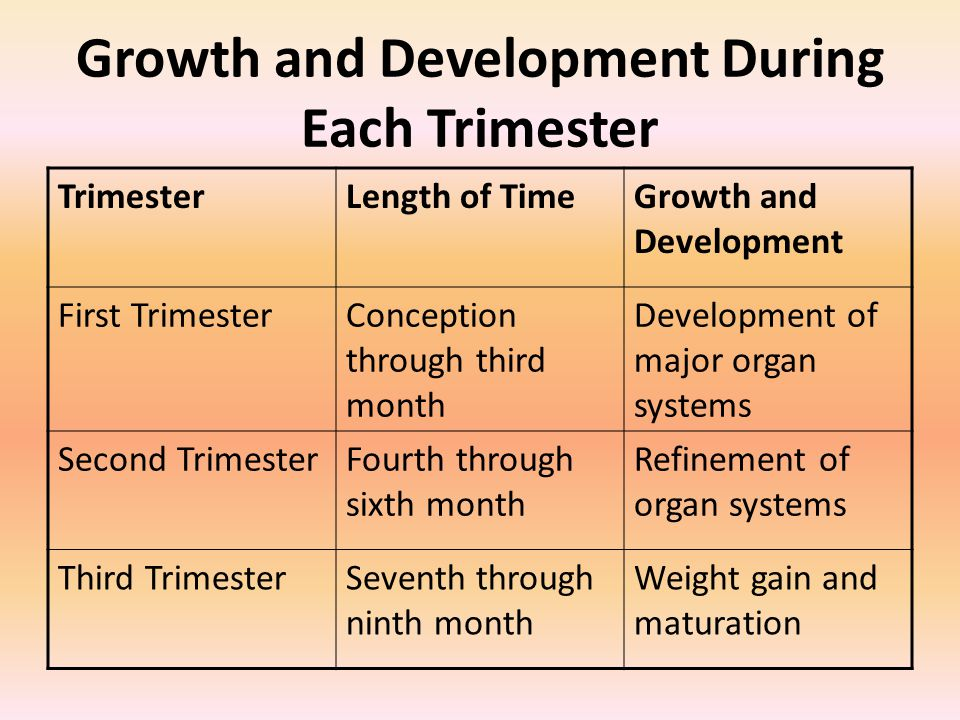Growth and Development During Each Trimester TrimesterLength of TimeGrowth and Development First TrimesterConception through third month Development of major organ systems Second TrimesterFourth through sixth month Refinement of organ systems Third TrimesterSeventh through ninth month Weight gain and maturation