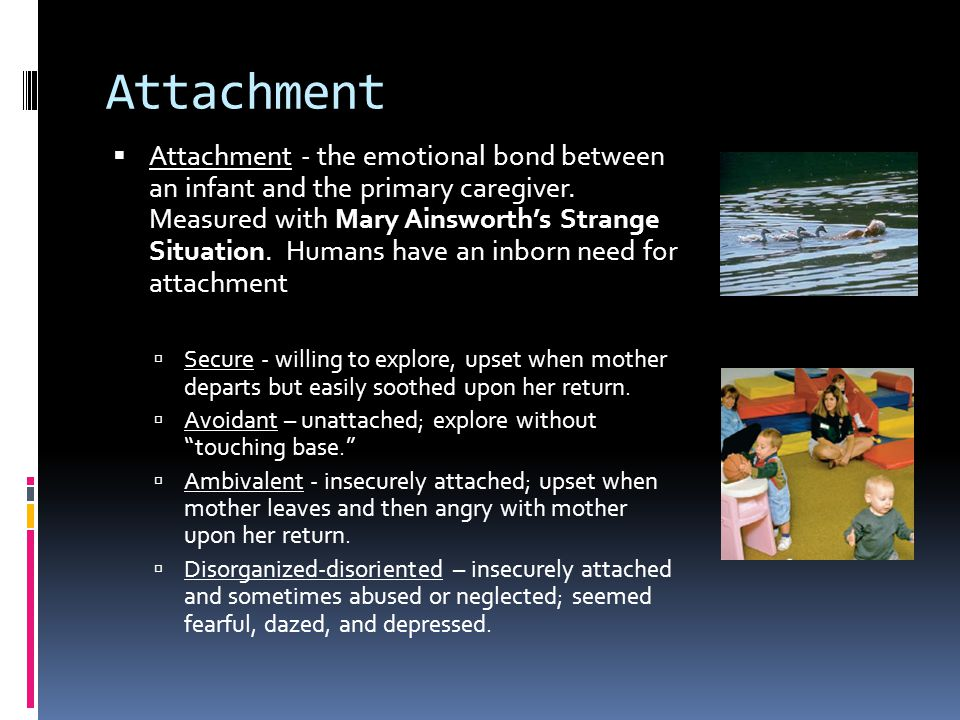 Attachment  Attachment - the emotional bond between an infant and the primary caregiver. Measured with Mary Ainsworth's Strange Situation. Humans hav