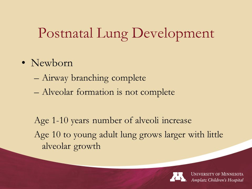 Postnatal Lung Development Newborn –Airway branching complete –Alveolar formation is not complete Age 1-10 years number of alveoli increase Age 10 to