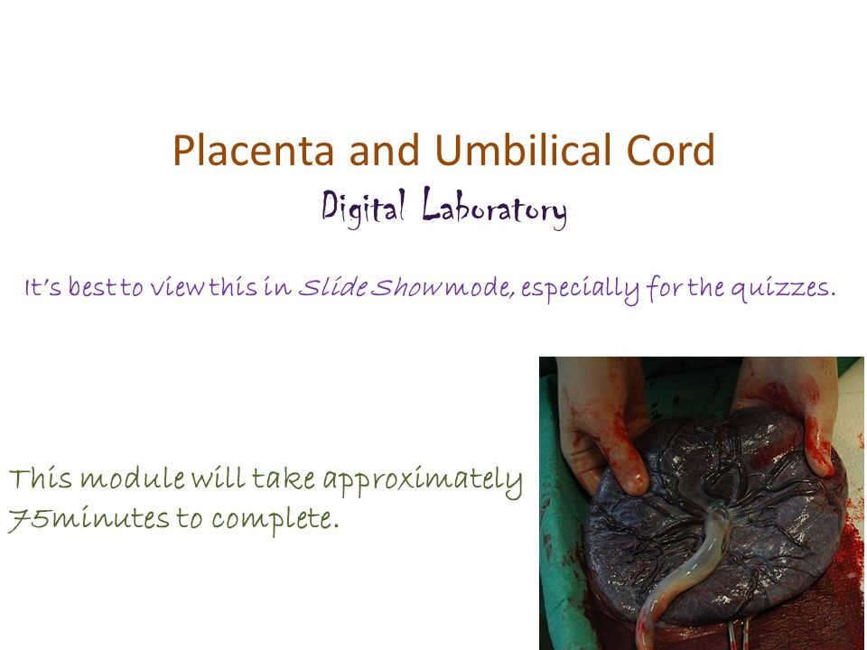 Placenta and Umbilical Cord Digital Laboratory It's best to view this in Slide Show mode, especially for the quizzes.