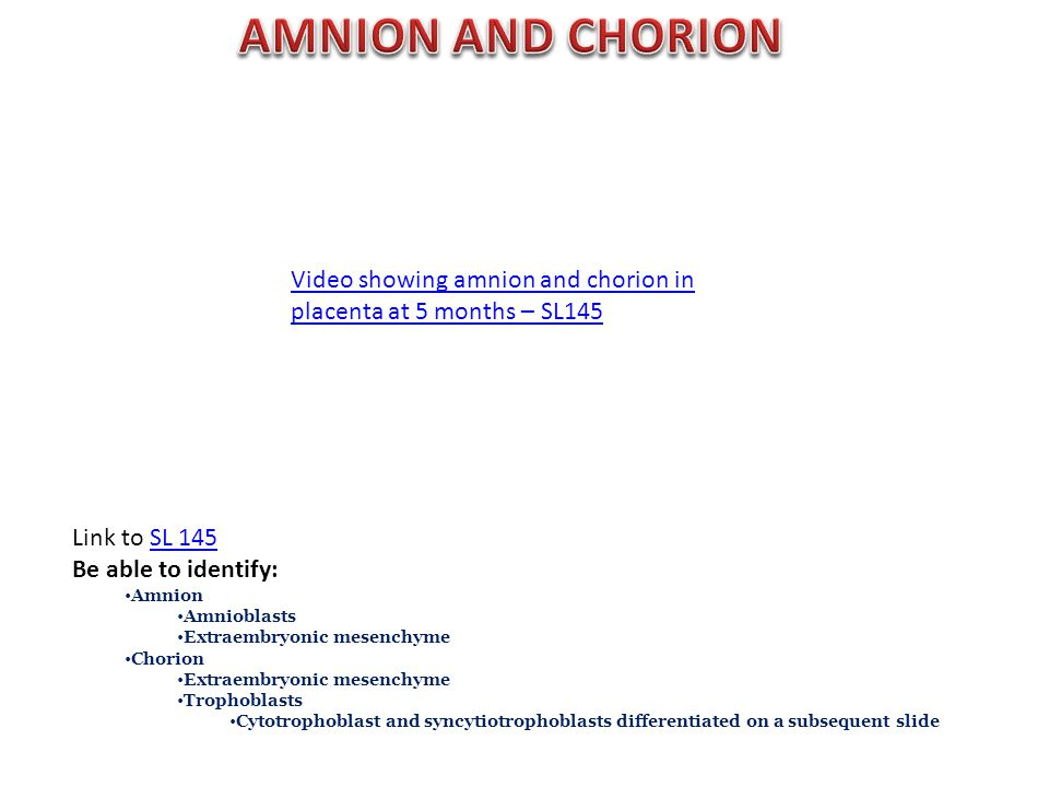 Link to SL 145SL 145 Be able to identify: Amnion Amnioblasts Extraembryonic mesenchyme Chorion Extraembryonic mesenchyme Trophoblasts Cytotrophoblast