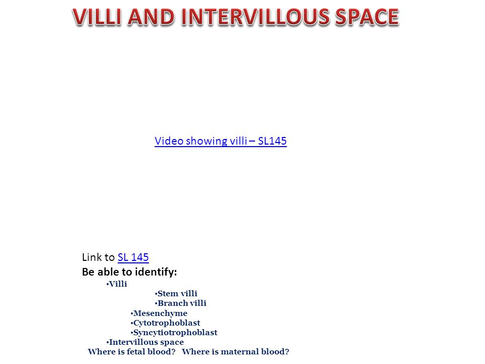 Link to SL 145SL 145 Be able to identify: Villi Stem villi Branch villi Mesenchyme Cytotrophoblast Syncytiotrophoblast Intervillous space Where is fetal blood.