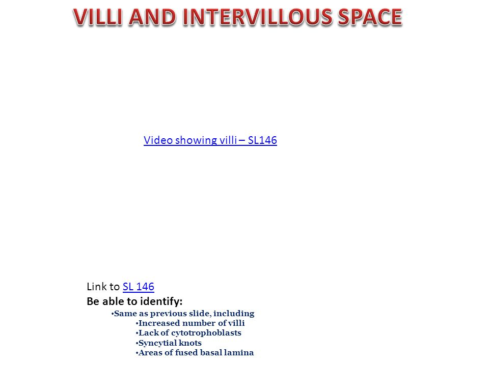Video showing villi – SL146 Link to SL 146SL 146 Be able to identify: Same as previous slide, including Increased number of villi Lack of cytotrophobl