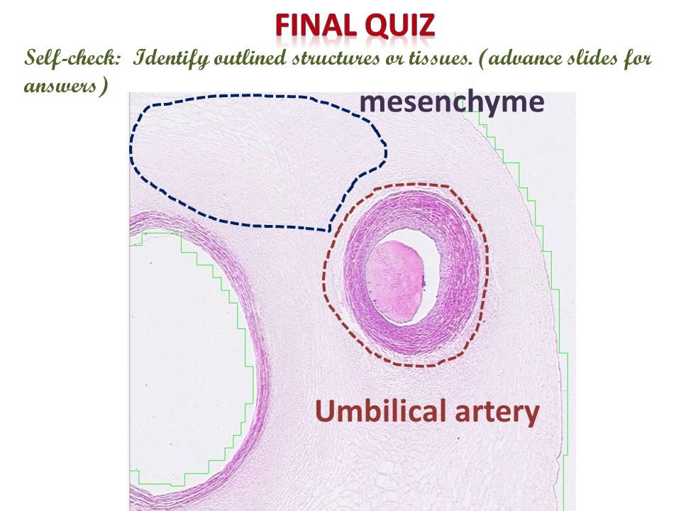 Self-check: Identify outlined structures or tissues.