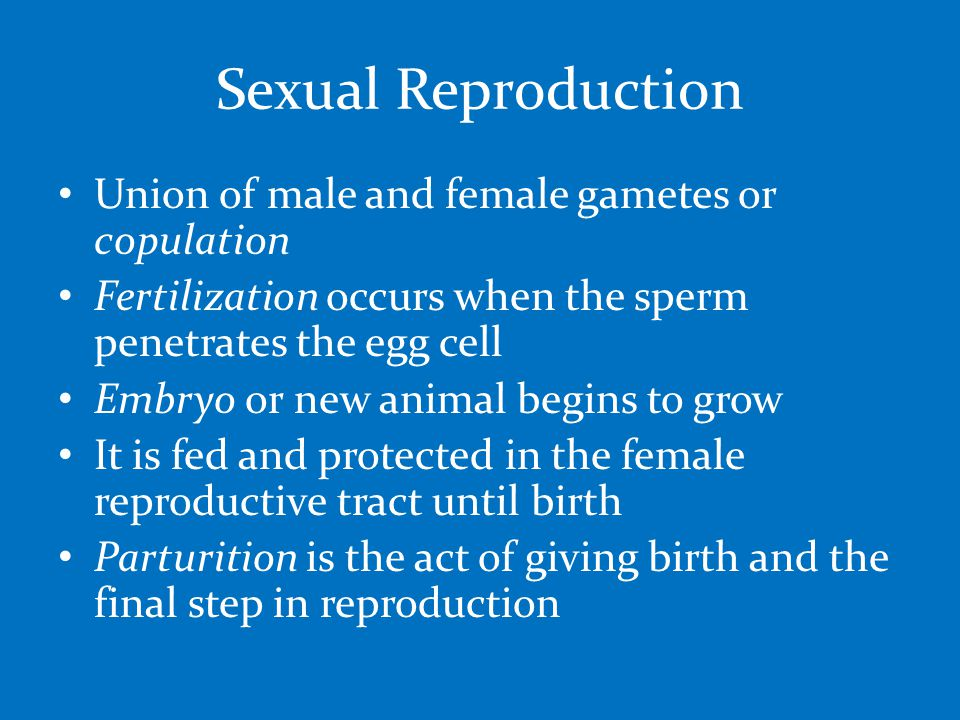Sexual Reproduction Union of male and female gametes or copulation Fertilization occurs when the sperm penetrates the egg cell Embryo or new animal begins to grow It is fed and protected in the female reproductive tract until birth Parturition is the act of giving birth and the final step in reproduction