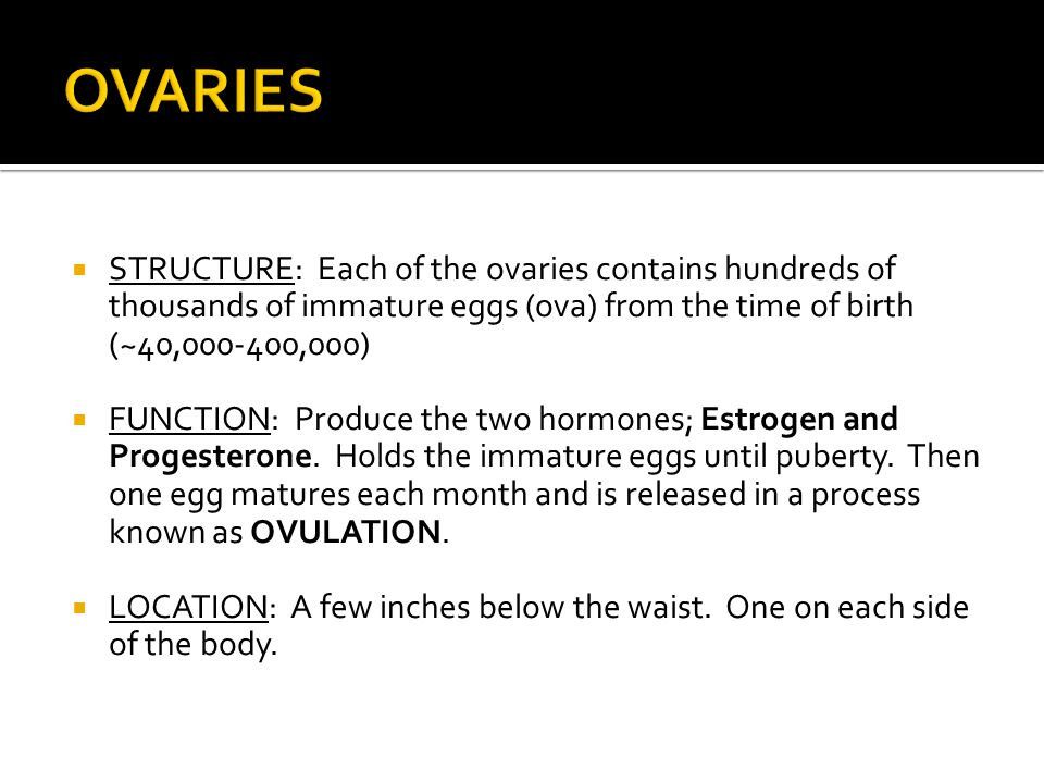  STRUCTURE: Each of the ovaries contains hundreds of thousands of immature eggs (ova) from the time of birth (~40,000-400,000)  FUNCTION: Produce th
