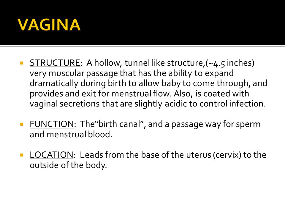  STRUCTURE: A hollow, tunnel like structure,(~4.5 inches) very muscular passage that has the ability to expand dramatically during birth to allow bab
