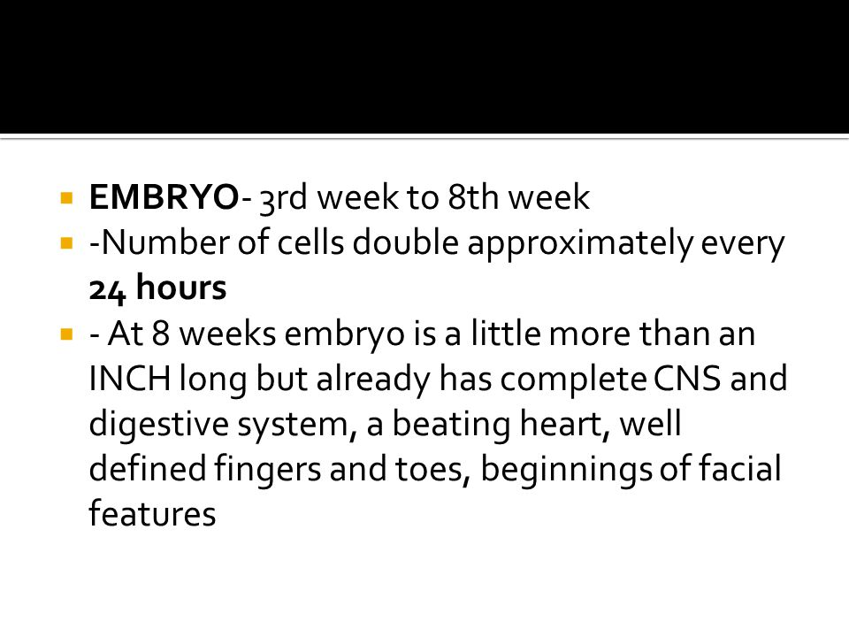  EMBRYO- 3rd week to 8th week  -Number of cells double approximately every 24 hours  - At 8 weeks embryo is a little more than an INCH long but alr