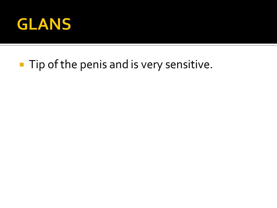  Tip of the penis and is very sensitive.
