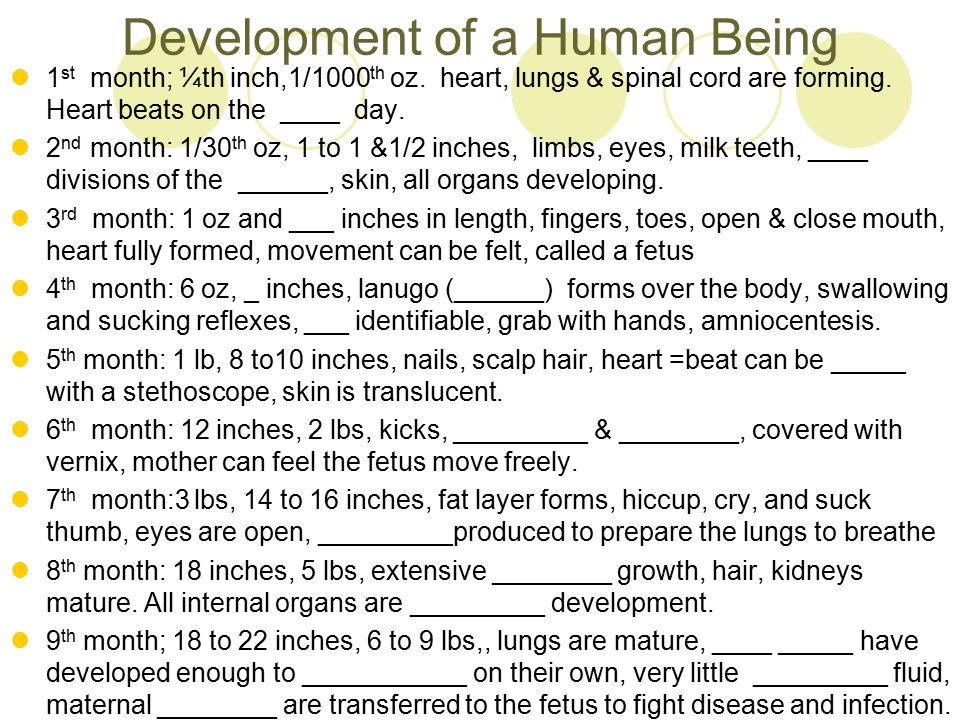 Development of a Human Being 1 st month; ¼th inch,1/1000 th oz. heart, lungs & spinal cord are forming. Heart beats on the ____ day. 2 nd month: 1/30