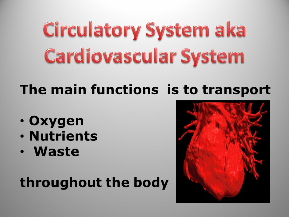 The main functions is to transport Oxygen Nutrients Waste throughout the body 15