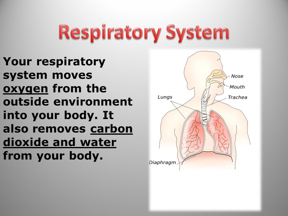 Your respiratory system moves oxygen from the outside environment into your body.