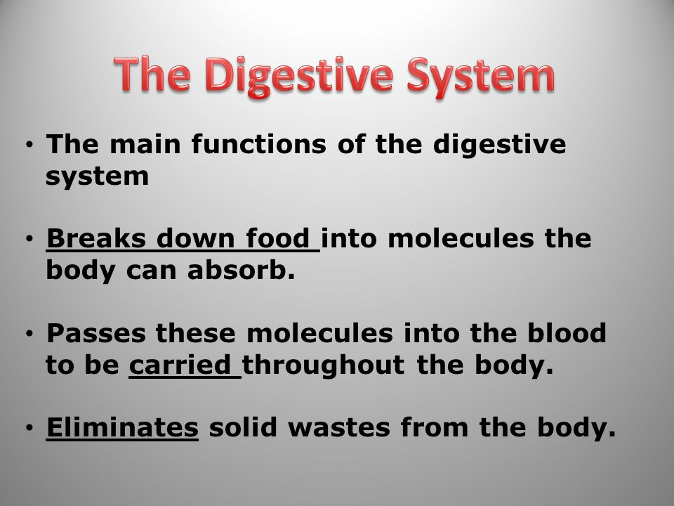 The main functions of the digestive system Breaks down food into molecules the body can absorb.